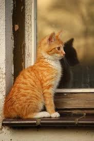 """Résultat de recherche d'images pour """"chat et fenetre"""""""