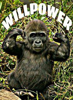 Vegetarian Bodybuilding, Go Ape, Monkey, Animals, Jumpsuit, Animales, Animaux, Monkeys, Animal