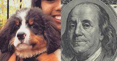Ben Franklin Reincarnated As a Dog #funny #Haha #Lol #happy