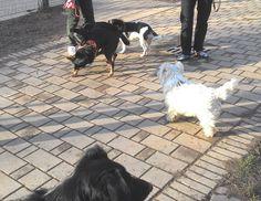 19/02/2016 - Torino con Peja, Zorba, Nina e Axel