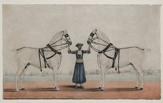 India | A Syce Holding Two Carriage Horses