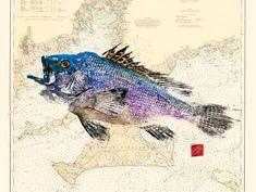gyotaku japanese art fish printing