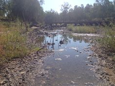 Creek; Australien; Queensland