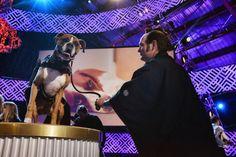 Hanzo-World Dog Awards