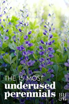 Theres a whole host of lesser-known, underused perennials that can add color and interest to your garden. Garden Yard Ideas, Lawn And Garden, Garden Projects, Perrinial Garden, Flower Garden Plans, Garden Edging, Garden Pests, Indoor Garden, Flowers Perennials