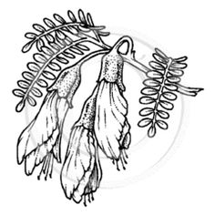 new zealand christmas images - Google Search Flower Line Drawings, Christchurch New Zealand, Long White Cloud, Steel Panels, Plant Pictures, Corten Steel, Scroll Saw, Christmas Images, Clear Stamps