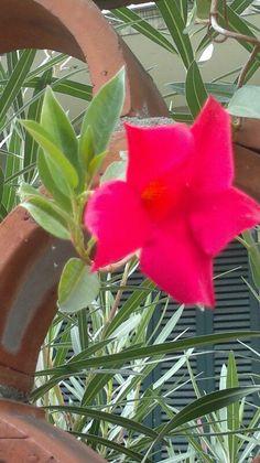 Flor en Viareggio By Laura
