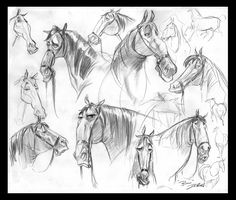 Why the long face? || CHARACTER DESIGN REFERENCES | Find more at https://www.facebook.com/CharacterDesignReferences if you're looking for: #art #character #design #model #sheet #illustration #best #concept #animation #drawing #archive #library #reference #anatomy #traditional #draw #development #artist #how #to #tutorial #conceptart #modelsheet #animal #Horses #Horse