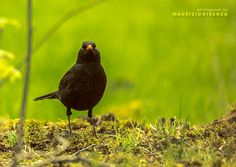 Worms to share ? by Maurizio Di Renzo on Worms, Bird, Animals, Collection, Animais, Animales, Animaux, Animal, Birds