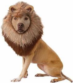 Animal Planets Lion Dog Costume - Medium on I'dBuyIt.At