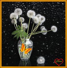 Одуванчики в вазе - Цветы анимация