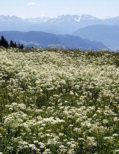 The Italian Alps - must go
