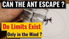 Viral Video Giant Ant trapped in pen circle but why ? Will drawing a doodle circle as a Pest Control with a pen trap a ant and stop it from leaving the doodl. Bug Trap, Lets Try, Pest Control, Ants, Funny, Animals, Animales, Animaux, Ant