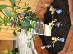 Sweet tea vodka lemon tree!- this is a great housewarming idea- vodka of choice could be substituted.