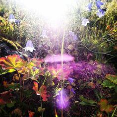 Mountain light and flower Tromsø Tromso, Aquarium, Mountain, Flowers, Nature, Goldfish Bowl, Aquarium Fish Tank, Aquarius, Royal Icing Flowers