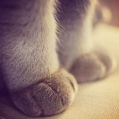 The fold. The magical overlap between cat ankle and cat paw. | Community Post: The 20 Cutest Pictures Of Cat's Paws