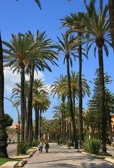 Promenade - Paseo Sagrera, Palma de Mallorca