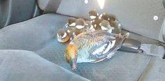 ducks in a cab
