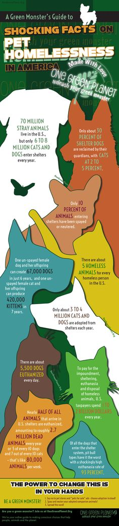 Shocking Facts on Pet Homelessness [INFOGRAPHIC] #infographic #pets