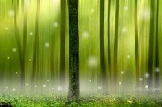 """""""Elf Forest"""" by Lars van de Goor on 500px.com"""