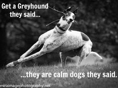 They're calm dogs they said...