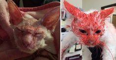En octobre 2015, Paul Wicker plaidait coupable d'avoir torturé et recouvert de peinture rouge un chat errant, à Boyne City, aux Etats-Unis. La cour a aujourd'hui rendu publique la sentence du forcené.
