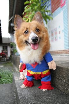 a9d68a3d 60 Best Corgi Outfits images | Cute baby dogs, Cute puppies, Cutest ...