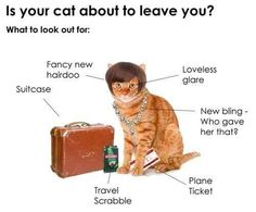 And of course, your cat is about to leave you if all this is going on. | 15 Signs Your Cat Is Leaving You