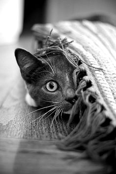 I love kitty cats and new research says introverts prefer cats to dogs?  what about you? cat or dog person?