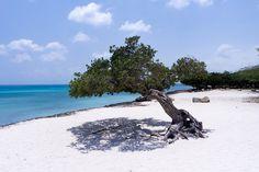 Der Eagle Beach auf Aruba ist ein Strand wie aus dem Bilderbuch. Lasst Euch inspirieren und entdeckt den schönsten Strand der ganzen Karibik!