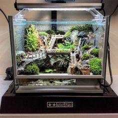 Tetra Aquarium, Aquarium Garden, Aquarium Landscape, Aquarium Fish Tank, Gecko Terrarium, Aquarium Terrarium, Terrarium Plants, Fish Tank Themes, Fish Aquarium Decorations