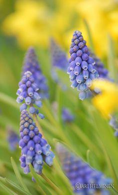 Flowers like bells