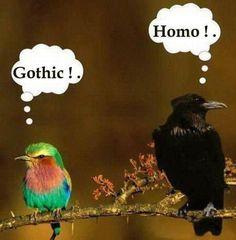 lustige tierbilder mit sprüche | ... und Unterhaltung » Unterhaltsames » schöne und lustige Tierbilder