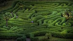 Flipping pancakes in the historic maze at Glendurgan Garden. Thanks to Steven Haywood for this incredible shot!