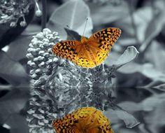 reflejo en el agua de una mariposa amarilla