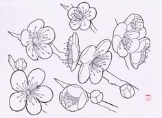 drawing flowers flash japanese flower sakura drawings tree tattoo easy step blossom cherry draw sketch outline sketches nature pdf water
