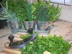 Para que servem as Ervas Kids Spa, Home Spa, Spa Day, Feng Shui, Health, Plants, How To Make, Coven, Chakras