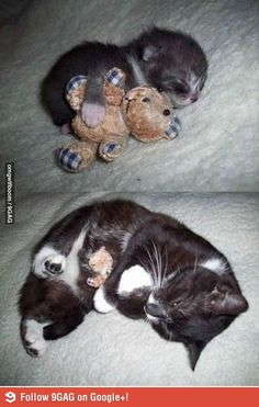 Buddies forever - Aww!  A couple of my cats had surrogate buddies but lost interest in them when they got older. This is so cute! #cats #aww