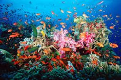 Image result for big coral reef