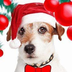 Merry Xmas! Thank you for all the love you've sent me from around the globe. I am one lucky dawg and I lick you all! xx