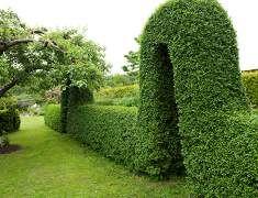 Muotoonleikattu pensas, puksipuu sekä perennapenkit kukoistavat puutarhassa
