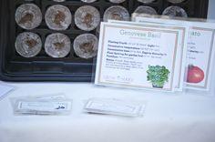 DIY Culinary Herb Garden Starter Kit