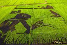Tanbo Art es el arte japonés de realizar dibujos en los arrozales.