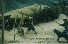 Akitas Hunting Yezo Bear