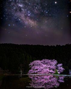 別所隆弘 Takahiro Bessho @TakahiroBessho  17時間17時間前 夜空に輝く天の川の下に、水入れしたばかりの田圃、その横に佇むエドヒガンの大木。奈良県宇陀市にある諸木野の桜、別名「牛繋ぎの桜」は、日本の自然美の結晶のように思えます。  #桜 #春 #cherryblossom