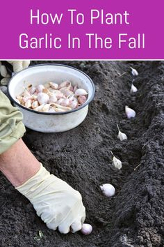Fall Vegetables To Plant, Fall Plants, Growing Vegetables, Planting Garlic In Fall, Growing Plants, Autumn Garden, Easy Garden, Lawn And Garden, Garden Ideas