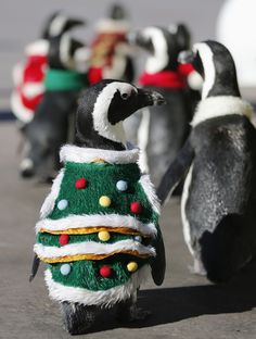 I've been waiting my whole life for this penguin dressed up as a Christmas tree.