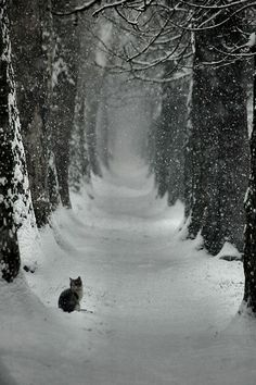 Winter Szenen, I Love Winter, Winter Magic, Winter Walk, Winter White, Winter Picture, Winter Road, Snow White, Snow Scenes