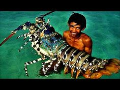 Top 5 Biggest Lobsters Ever Caught A lobster grows to a weight of one pound after seven years in cold water and gains an additional pound every three years t. Fishing Tackle Shop, Bait And Tackle, Live Lobster, Crab And Lobster, Walleye Fishing, Carp Fishing, Deep Sea Fishing, Gone Fishing, Salmon Species