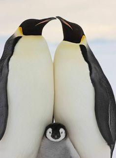 penguin fam